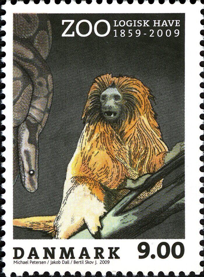 Golden Lion Tamarin Leontopithecus Rosalia Copenhagen Zoo Golden Lion Tamarin Leontopithecus Rosalia