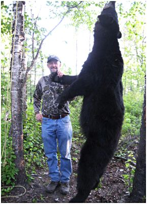 Get acquainted with the 4 basic black bear hunting ways
