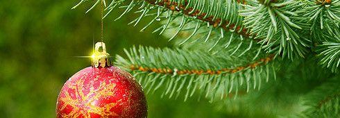 Choisir le sapin de Noël parfait   Atelier Jean Guglia et Fils Enr.