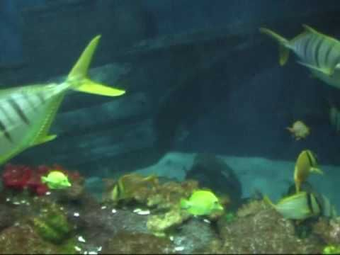 Sea Life Speyer / Germany HIGH Quality - YouTube