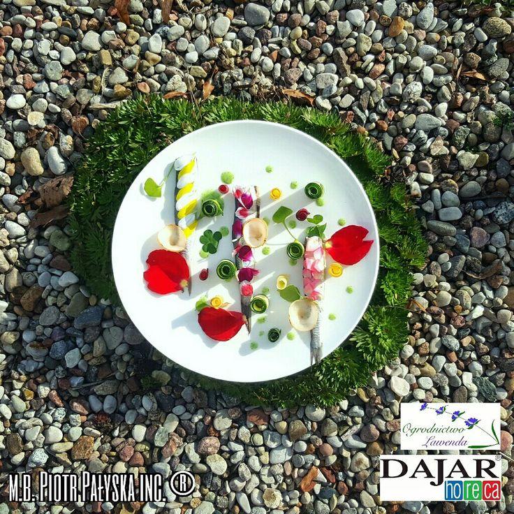 I tak od tego tygodnia do współpracy ze mną i firmą Dajar Horeca  dołączyło ekologiczne Ogrodnict Lawenda. PLATE 11 Moskaliki/Gerber/Goździk/Pelargonia Herring/Gerber/Carnation/Geranium made by Piotr Pałyska  #plate #abstract #gastronomy #flower