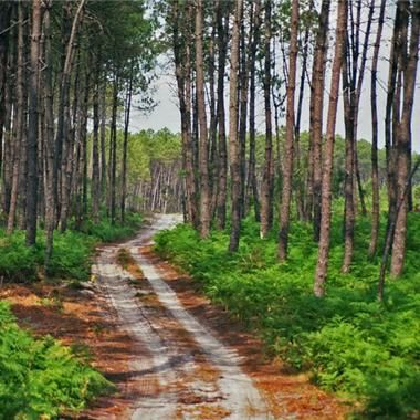 Balade en forêt à la Toussaint