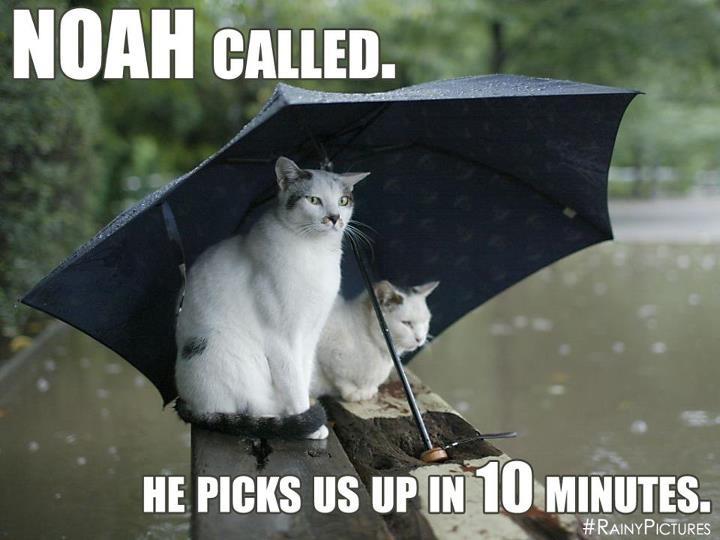 Image result for too much rain noah's ark meme