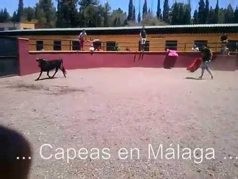 Capeas en Málaga en despedida de soleros