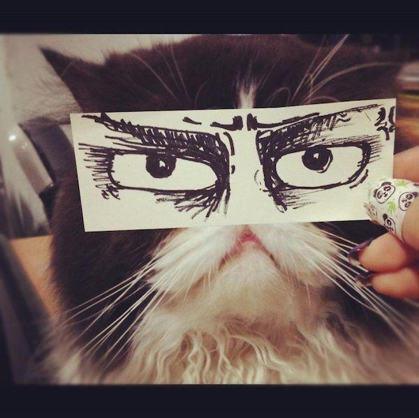 Les Japonais ont une nouvelle lubie : dessiner des yeux façon manga pour leurs chats  Corentin Vilsalmon    Les Japonais sont les rois des tendances loufoques, et ils le prouvent une...