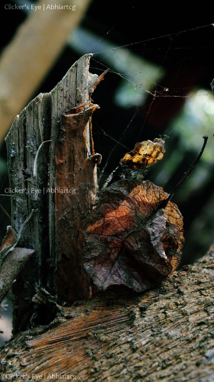 #dry #treebark #leaf