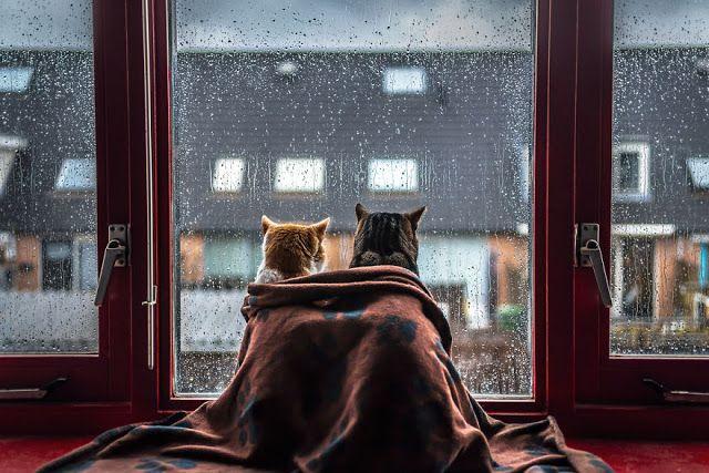 Fotógrafa faz série com seus gatos na janela em dia de chuva