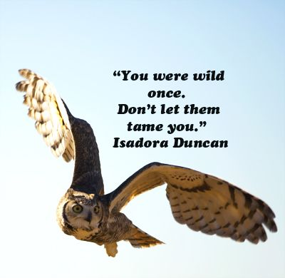 """You were wild once.  Don't let them tame you.""  Isadora Duncan  -- On Great Horned Owl image by Dr. J.T. McGinn --  Explore quotes on life's journey at http://www.examiner.com/article/travel-a-road-of-literate-quotes-about-the-journey"