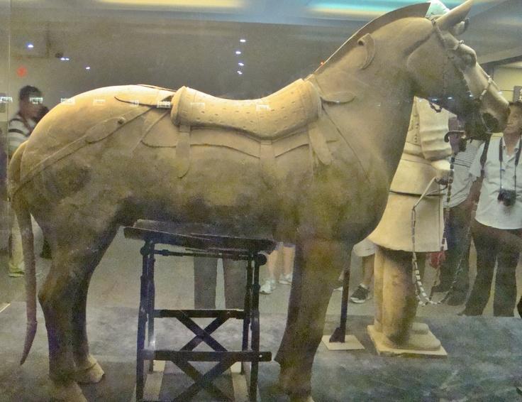 Beautiful restored terracotta horse at the Terracotta ...  Beautiful resto...
