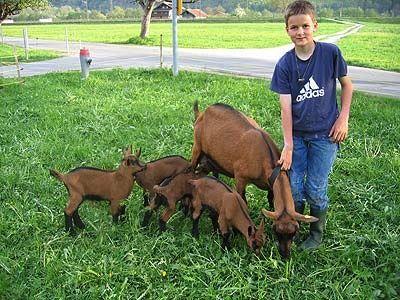 Silas Wyss und seine Ziege Steffi sind stolz auf die Vierlinge. Namen haben die Kleinen im Moment noch keine.