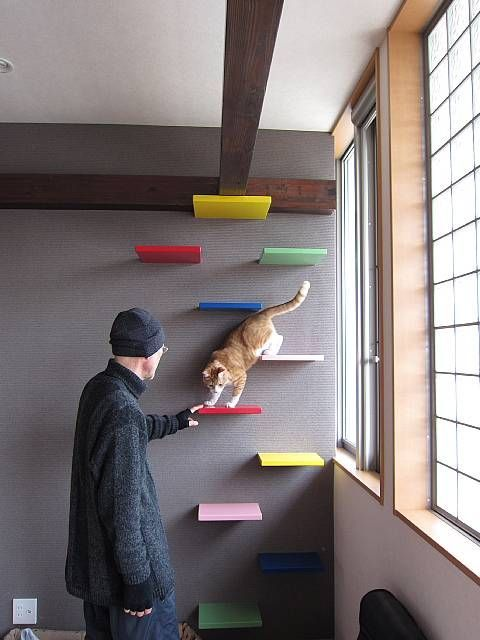 cat shelves | Found on blogimg.goo.ne.jp