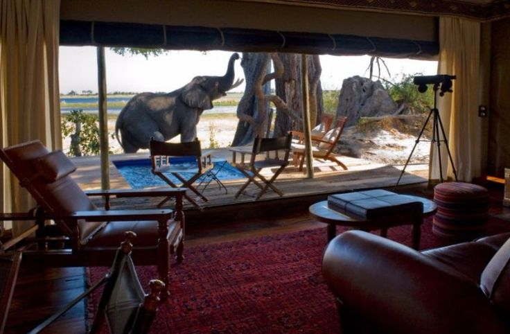"""Experience the best of Botswana in utmost style & comfort at a trio of immaculate Great Plains Conservation safari lodges. Begin at the startlingly beautiful Selinda Reserve & rest easy at one of the """"greenest"""" camps on the planet. Next, venture deeper into a matrix of palm-dotted islands, floodplains & woodlands of the Okavango Delta. Your safari abodes all offer gourmet cuisine, the most advanced safari vehicles & expert guides. Book online or contact us to turn the dream into reality >"""