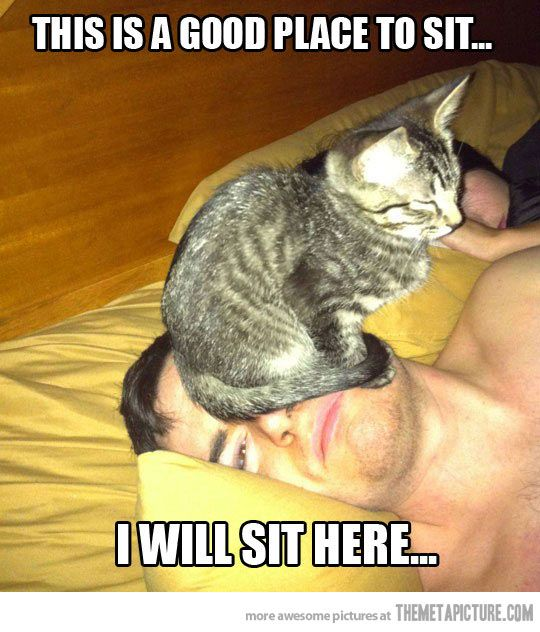 every cat has done it