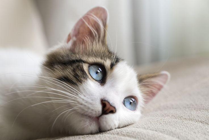 Adoptez un chat, vous serez détendu. Dans une vidéo promotionnelle, une association britannique de défense des animaux met en avant les vertus thérapeutiques des félins pour encourager à l'adoption.