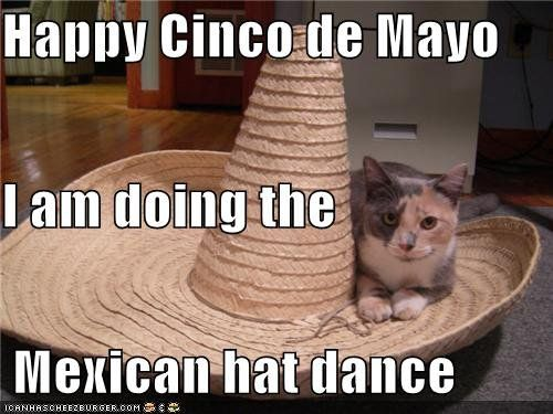 Pin for Later: Cinco de Mayo Memes Better Than Margaritas  Meow de Mayo.  Source: Cheezburger
