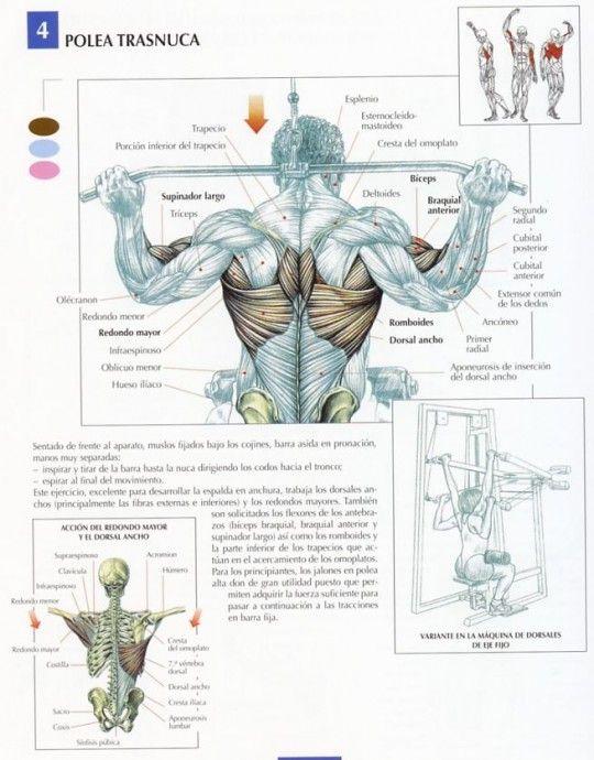 Los 10 mejores ejercicios de espalda - El blog de amigosdeldeporte