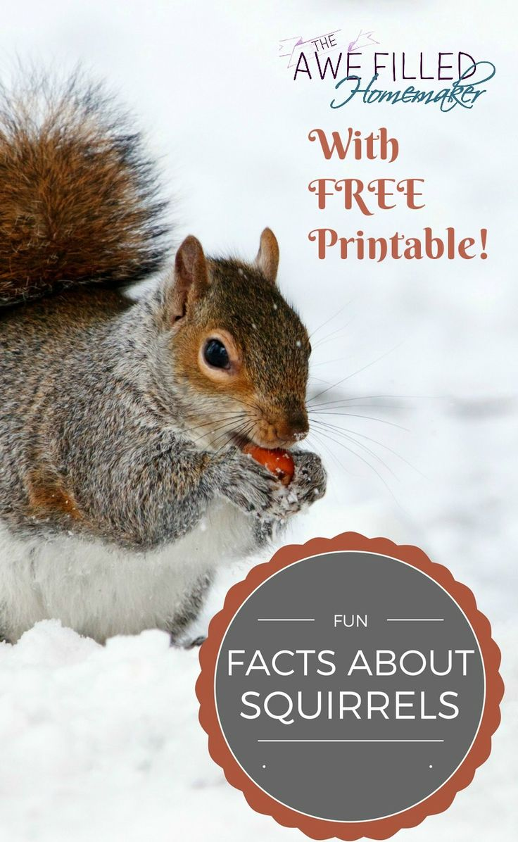 Show your backyard friends some love on January 21st for National Squirrel Appreciation Day! Plus get your FREE printable! via @AFHomemaker