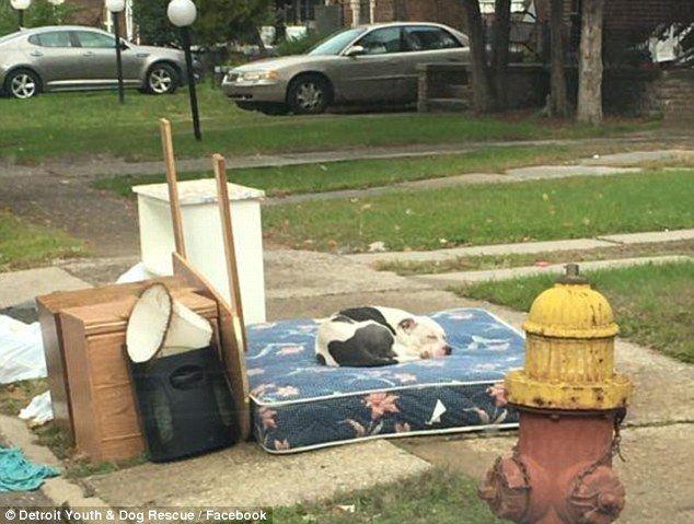 Famiglia si trasferisce: lascia cane insieme a mobili da buttare. Questa è la storia di Boo, abbandonato dalla sua famiglia.