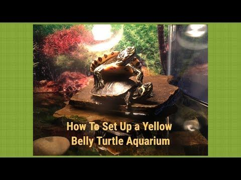 How To Set Up A Yellow Belly Turtle Aquarium!!! - YouTube