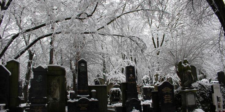Olšanské hřbitovy v číslech