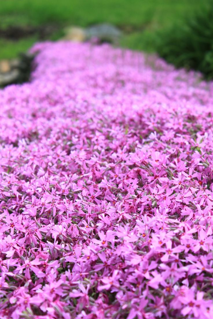 18 best urban garden images on pinterest | rooftop gardens