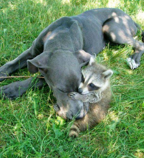 perrito y mapache.