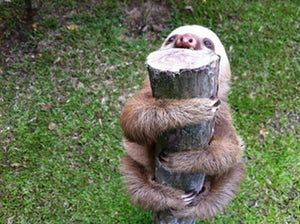 I'm Very Into You, Log is listed (or ranked) 1 on the list 47 Adorable Pictures of Sloths