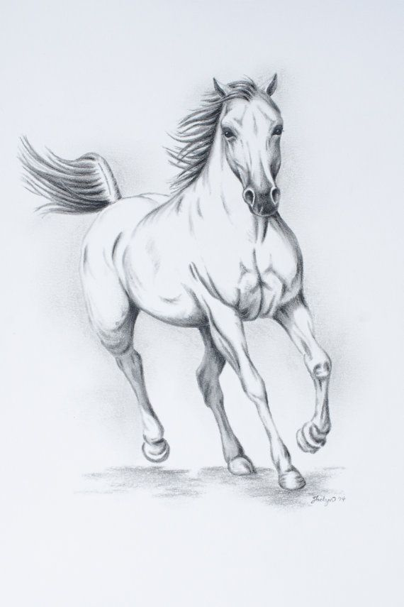 "ORIGINAL Charcoal White Horse sketch - 11""x14"" - Horse running, Wild Horse Drawing, Horse drawing, Horse Art"