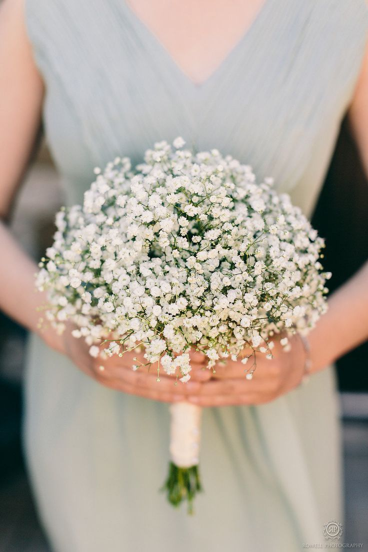 Delicate baby's breath, beautiful for a DIY bouquet.