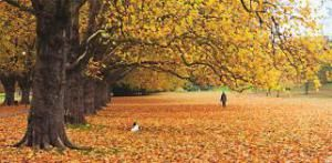 The Melancholy Glory Of Autumn Leaves (And Missing An English Pint)