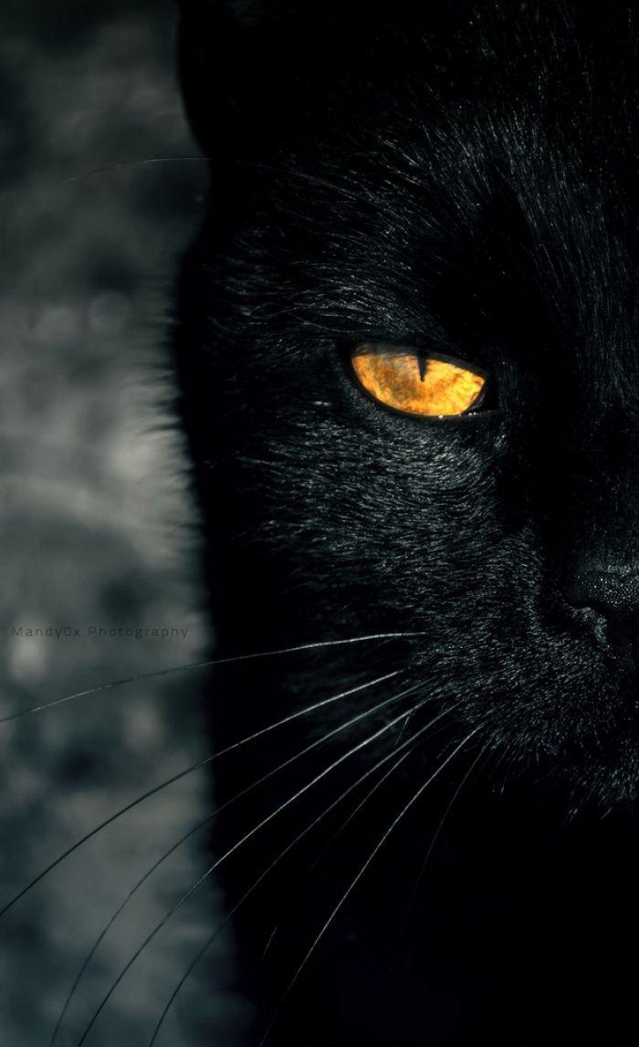 Поздравление, картинка с кошкой черной
