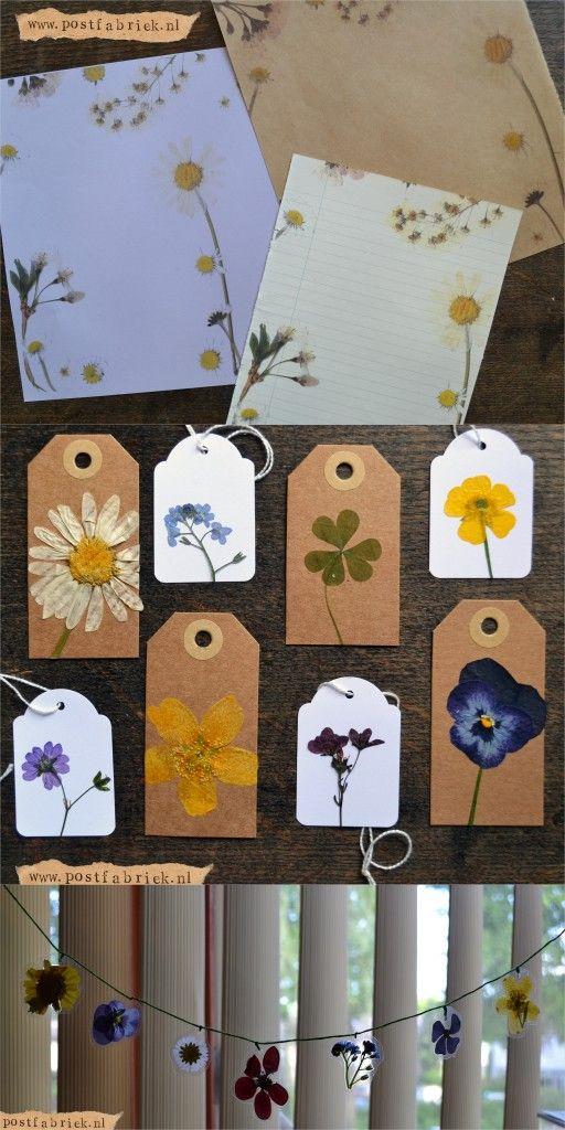 Bloemen Drogen Lavendel-004