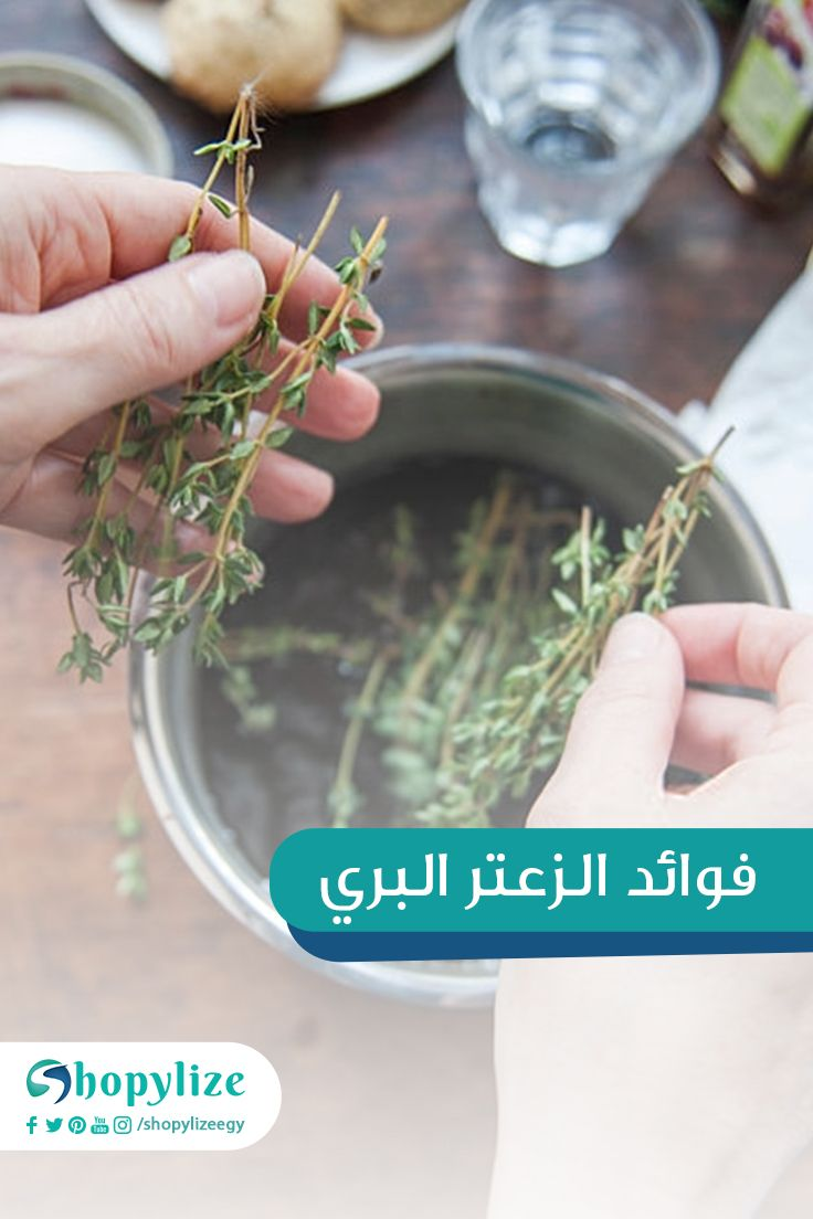 فوائد الزعتر البري How To Dry Basil Herbs Basil