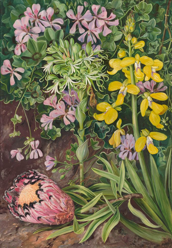 416. An Old Friend and its Associates in South Africa. Prints by Marianne North | Magnolia Box