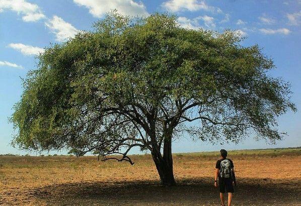 Foto Foto Wisata Taman nasional baluran