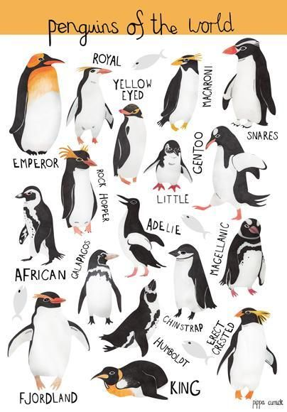 Penguins - visit all the ones in Britain  Pin from: Illustration Friday :: Children's Book Illustrator - Pippa Curnick