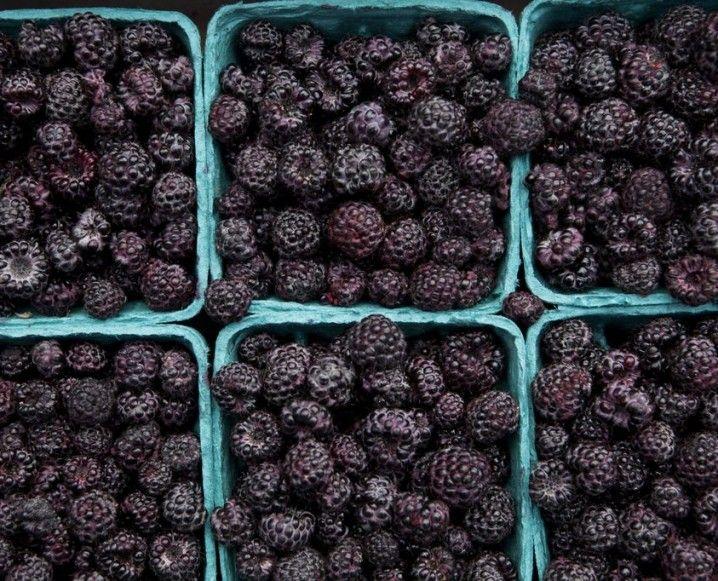 Benefits of one of the best superfood berries: Blackberries