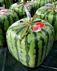 Vierkante meloen. Ze worden gekweekt in vierkante doosjes zodat het fruit de vorm aanneemt van de doos, en vooral in Japan is het razend populair omdat de vierkante meloenen precies in de koelkast passen. Zo groot zijn namelijk de dozen. Er is dus goed over nagedacht. De prijs ligt 20x hoger dan de gewone watermeloen.