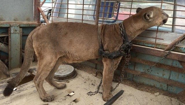 Wild animals imprisoned and abused for circus acts and profit..blows.  For the love of animals. Pass it on.