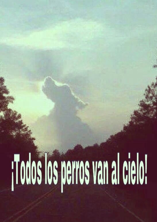 Todos los perros van al cielo