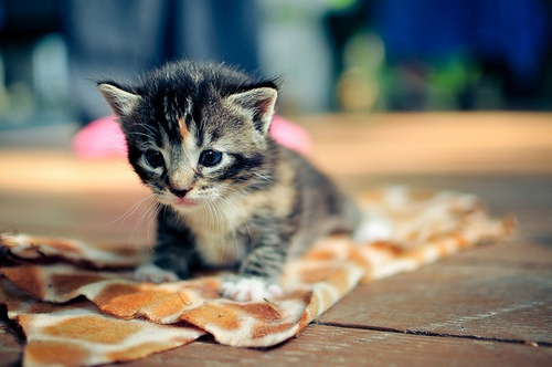 so cute: Kitty Cats, Stuff, Adorable Animals, Meow, Baby Kittens, Box, Things, Baby Animals, Smile