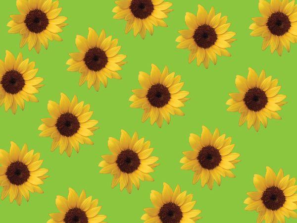 Imagenes de flores botanica auto design tech for Azucena plantas jardin