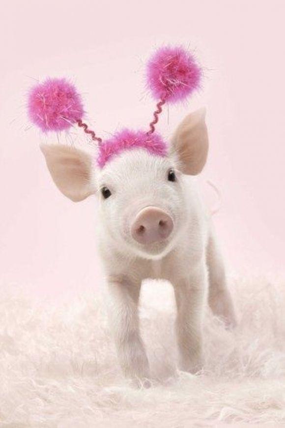 Ia Animals R Amazing | Cutest Paw