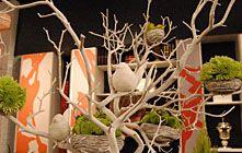 white manzanita branches
