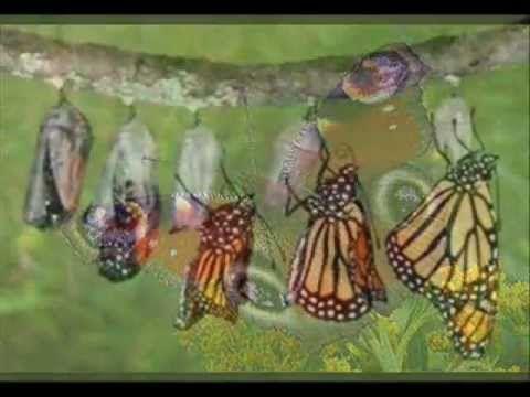 Este vídeo es un recurso educativo para explicarles a los niños de 2º ciclo la metamorfosis de los insectos y los tipos que existen. Espero que les sirva. Un...