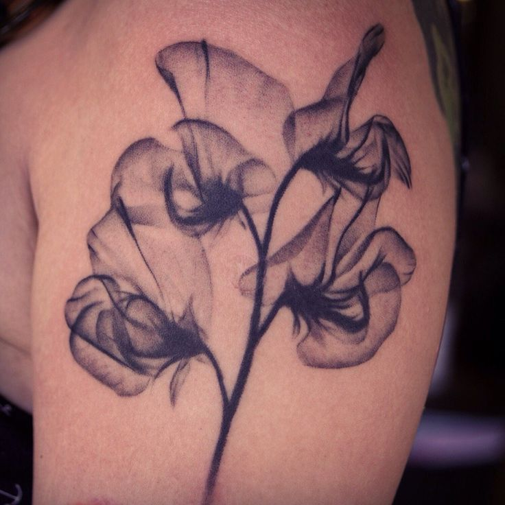 Black Diamond Tattoo - Venice, CA, United States. Sweet Pea Flower Tattoo by Justin Jakus