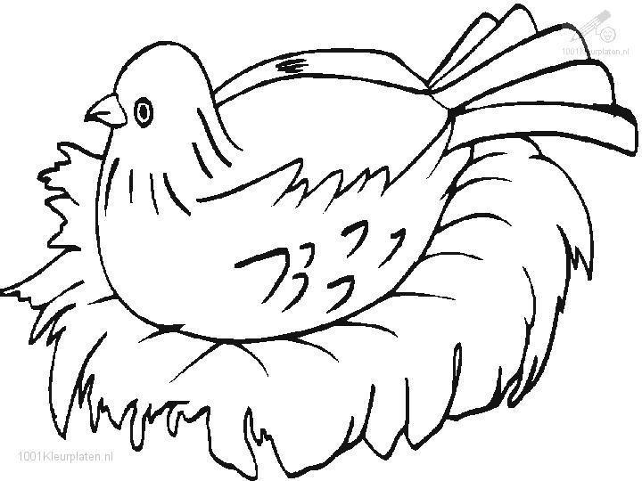 Ungewöhnlich Malvorlagen Vogelnest Bilder - Beispielzusammenfassung ...