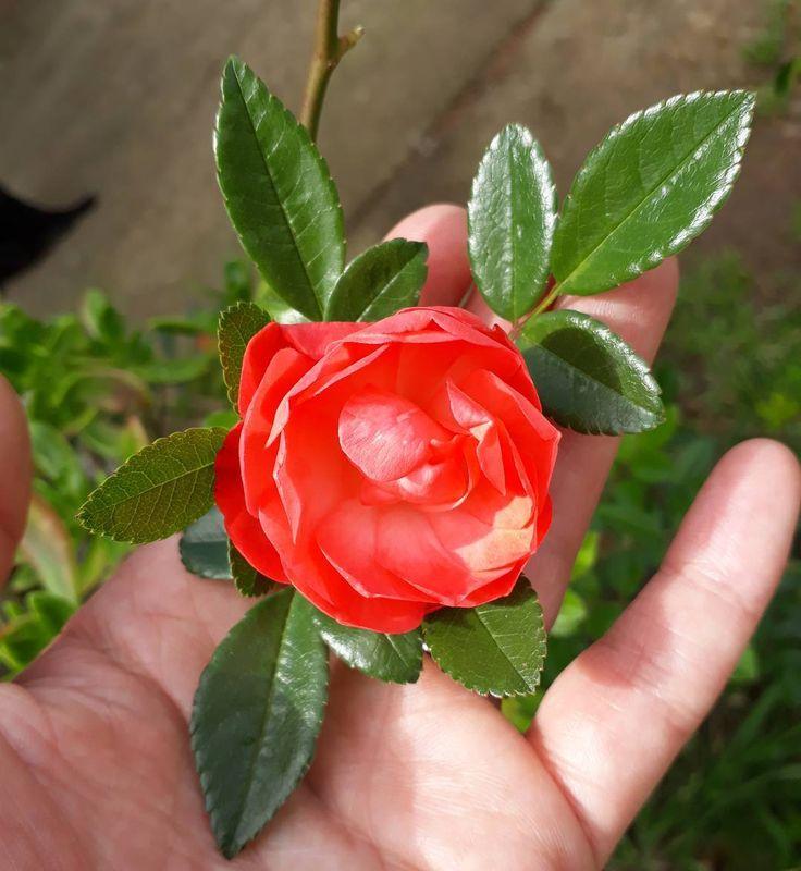 """20 curtidas, 1 comentários - Um Pontinho (@umpontinhobordados) no Instagram: """"Sextou!!! Bom dia!!! ❤❤❤ #umpontinho #noquintal #nofilter #primavera #rose #color #inspiracao"""""""