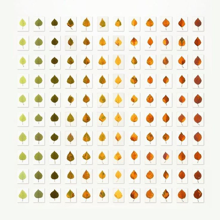 The #Waiting, 2011. Leaf, light, 120 unique #dye destruction #prints, 211 × 211 cm / 83 × 83 in private collection From a distance, this grid of 120 #birch #leaves from various times of the year 'reads' like a set of uniformly coloured #shade cards. On closer inspection, however, it becomes clear that no two #leaves are identical in either shape or colour. #British #photographic #artist Garry Fabian #Miller has worked without a #camera since 1984, creating images directly on light-sensitive…