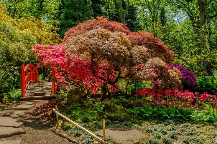 FotoCorn posted a photo:  Clingendael Japanse tuin, zonovergoten en in volle schoonheid  Japanese Garden in Clingendael, The Hage, Netherlands.